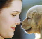 Girl and golden retriever puppy touching noses