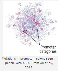 Mutations in promotor regions seen in people with ASD