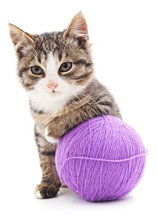 photo of kitten with yarn, illustrating unraveling autism from anxiety